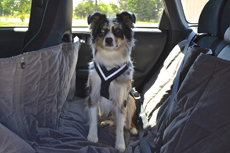 Allsafe Seatbelt Harness