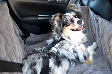 Allsafe Harness, Sleepypod Harness & Dog Travel Car Accessories