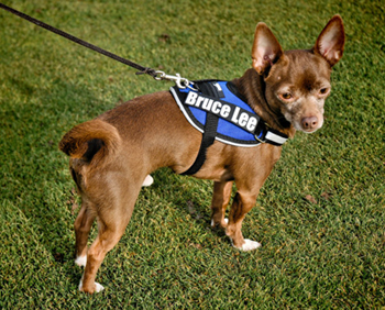 Dog Agility Harness - Brilliant K9 Harnesses for dog agility