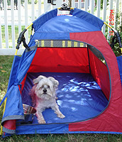 Made for dog professionals by dog professionals. Field tested on REAL show u0026 performance dogs! & Mighty Mite Dog Gear - Dog Tents and Soft Sided Dog Crates