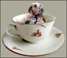 Small Teacup Dog Breeds
