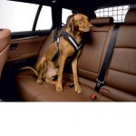 AllSafe_Harness_Dog_1
