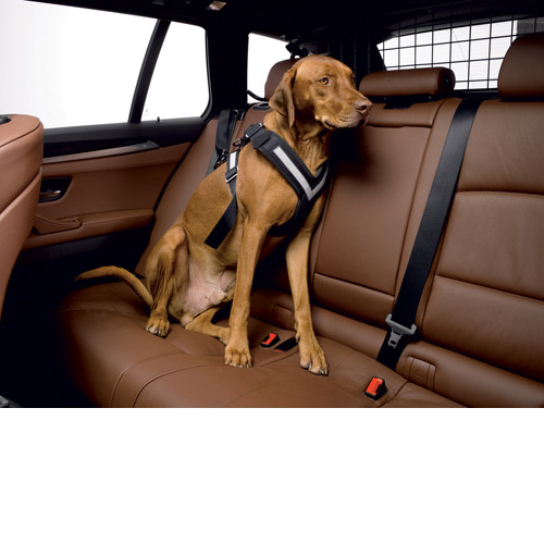 All Safe Dog Harness