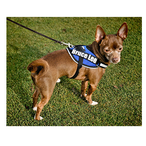 Teacup Dog Agility Harness - Mighty Mite Dog Gear