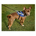Agility Harness Teacup