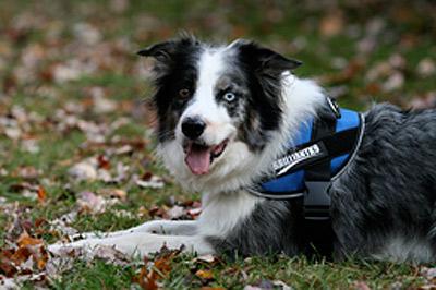 Medium Dog Harness Mighty Mite Dog Gear