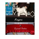 Monogrammed Dog Grooming Table Cover