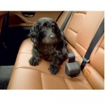 Allsafe Click & Roll Dog Safety Belt System