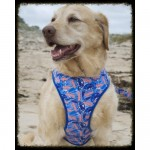 Quick Dry Dog Harness - Surf Dog Australia Boardies (Board Short!) Quick Drying Dog Harnesses