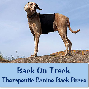 Back On Track Therapeutic Canine Back Brace